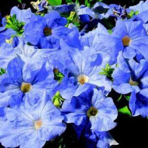 رنگ آبی اطلسی