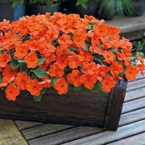 رنگ نارنجی حنا