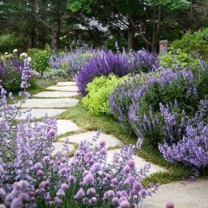 گل استاتیس در باغ های سنگی